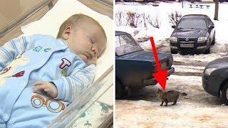 this-baby-is-abandoned-and-left-to-freeze-to-death-but-now-watch-what-this-cat-does