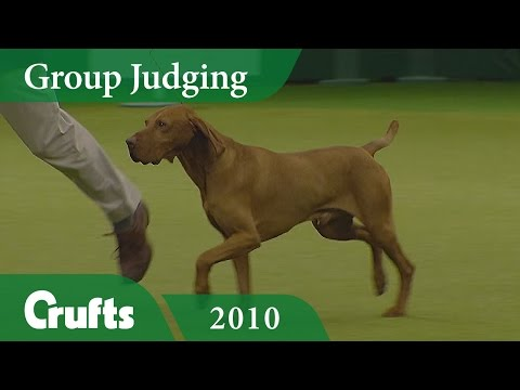 Hungarian Vizsla wins Gundog Group Judging (Again!) at Crufts 2010 | Crufts Classics