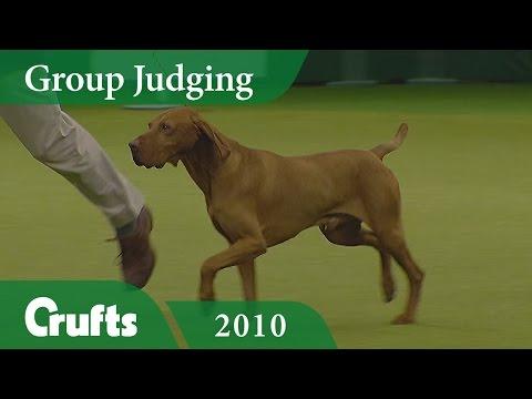 Hungarian Vizsla wins Gundog Group Judging (Again!) at Crufts 2010 | Crufts Dog Show