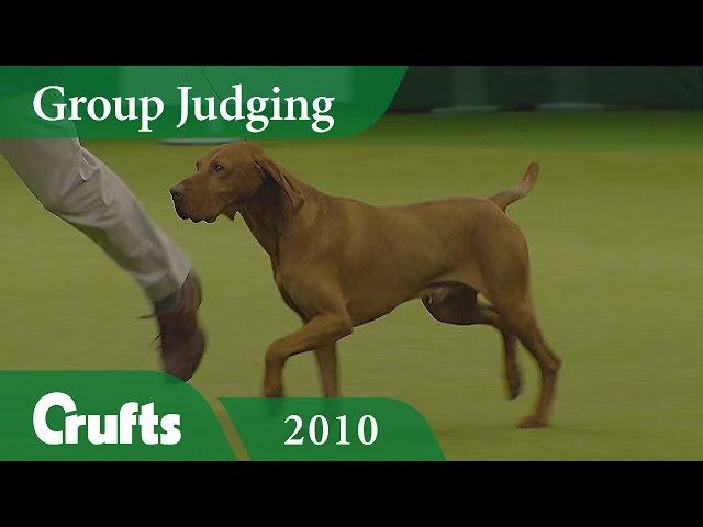 Hungarian Vizsla wins Gundog Group Judging (Again!) at Crufts 2010 | Crufts Classics
