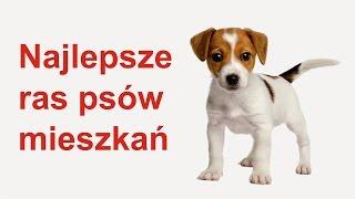 Najlepsze ras psów mieszkań