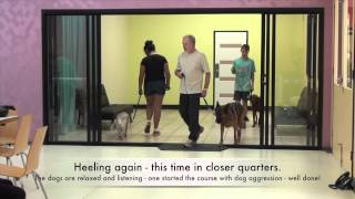 Alpha Dog Training 4 Day Fast-track January 2015
