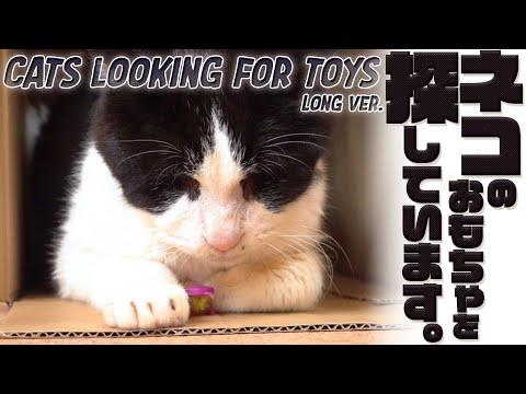 ネコのおもちゃを探しています。