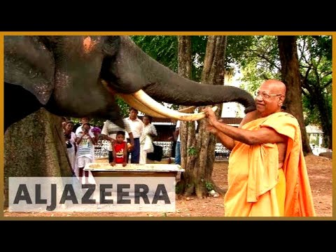 Sri Lanka's elephants: Tradition versus animal rights