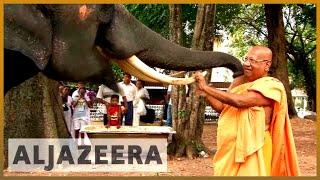 Sri Lanka's elephants: Tradition versus animal rights