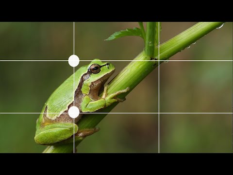 Rules of photography and composition .!! മലയാളം tutorial    You must know    Nikhil Raj thumbnail
