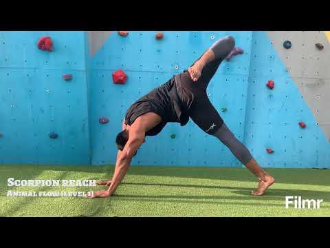 Ashar Fitness- Animal flow LEVEL 1