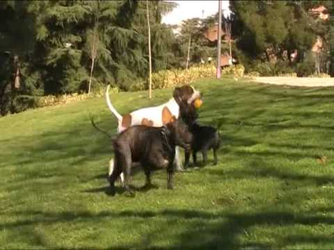 DANGEROUS DOGS : Neo & Betty 2010 Introducing El Vato