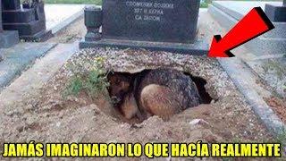 Pensaban que este perro lloraba la muerte de su amo, pero escondía algo aún más conmovedor.