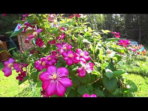 Люпин - Растения и цветы