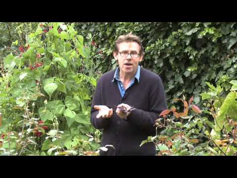 Nigel Slater Tender - A Cook and his Vegetable Patch. Part 1 Beans
