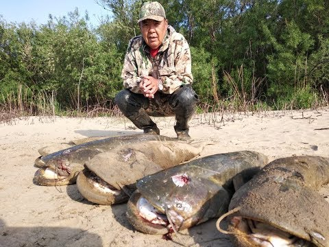 СОМЫ СОШЛИ С УМА!!! Рыбалка на поплавочную удочку.
