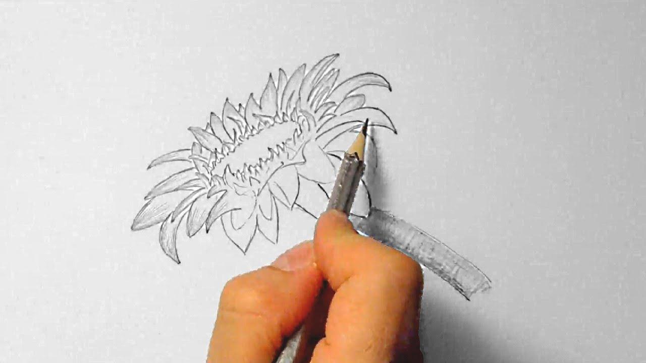 Sonnenblume Chinesisch