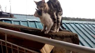 EXPOSED!!!!!!CATS LOVE SEX..THEY DID IT ON MY BALCONY