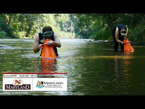 AccessDNR August 2018 - Maryland Department Of Natural Resources