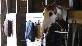 Ithaca College Equestrian Team