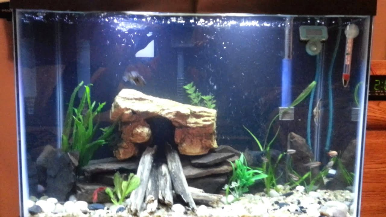 Fish in new aquarium - Fish In New Aquarium