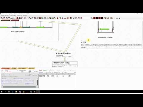 MCDS Tutorial: Site Specific Recombination and Lambda Red Recombination