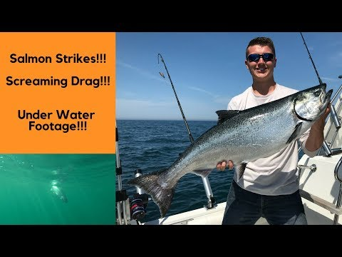 Lake Michigan Salmon Fishing *** Strikes & Screaming Drag***