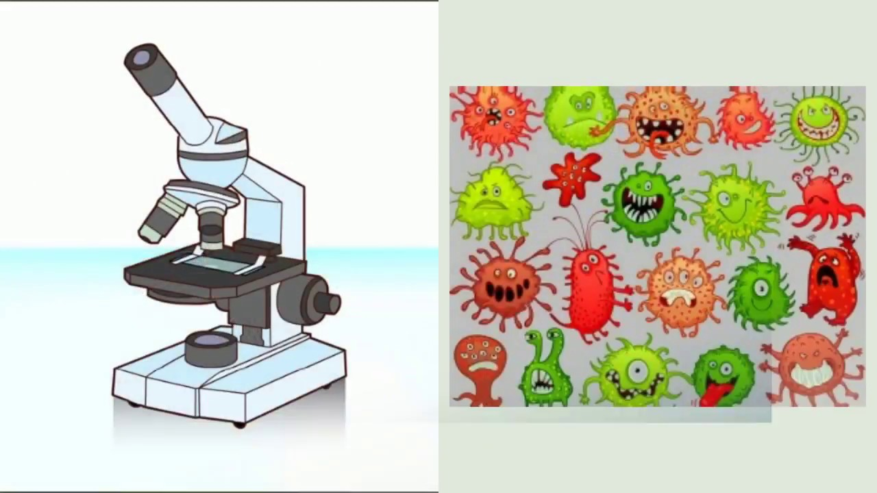 bacterie versus virus