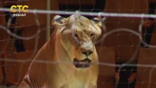 Программа Львы Африки(, 2016-07-21T18:01:27.000Z)