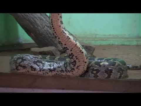 Guindy Snake Park | Chennai | Tamil Nadu | India
