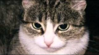 Детская песня - кошка беспородная