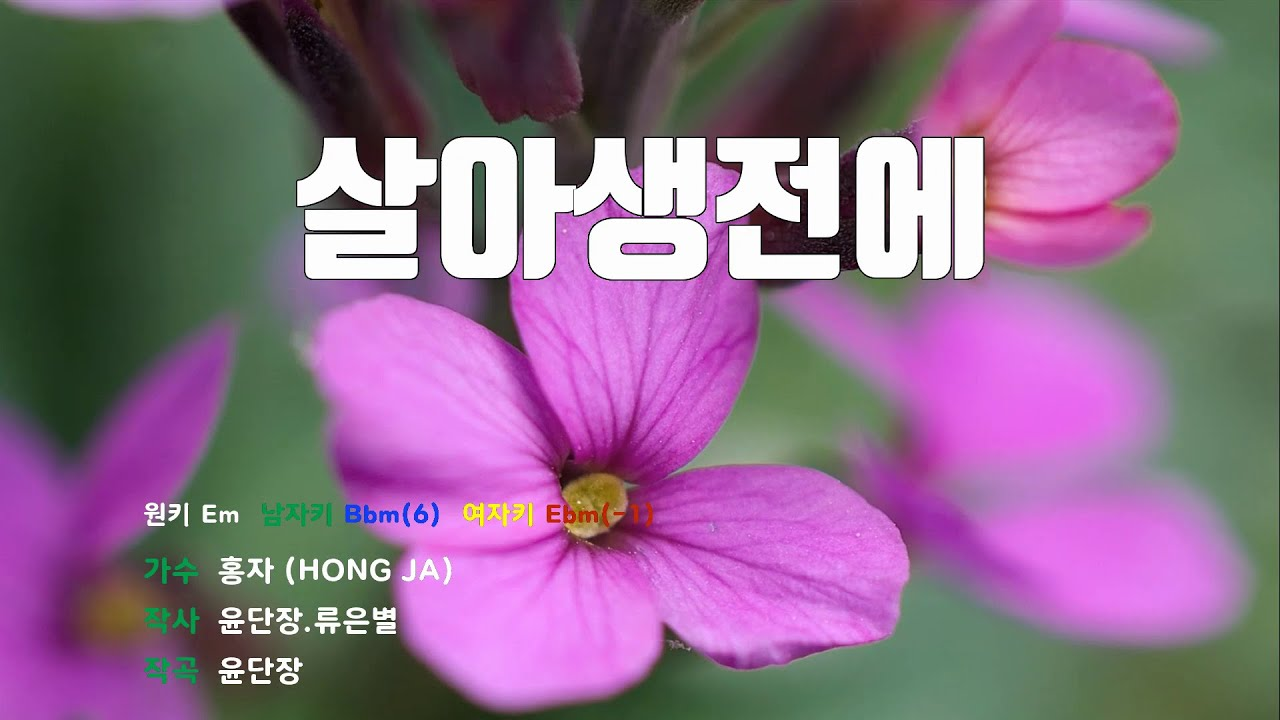 Download [은성 반주기] 살아생전에 - 홍자(HONG JA)
