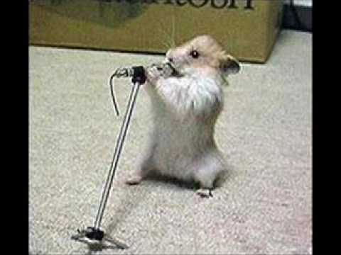 Hamster singing Fatboy slim - Brimful of asha