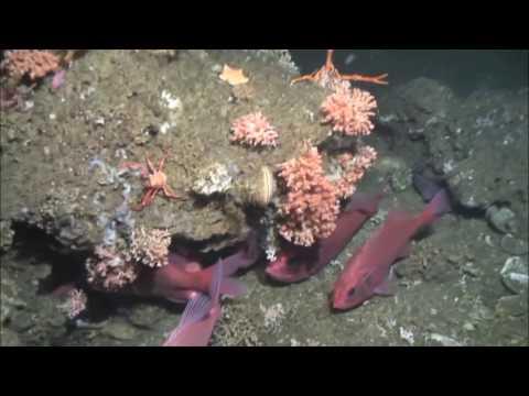 IMMERSION EN TERRE INCONNUE: la mer profonde en Mauritanie