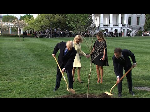 Trumps, Macrons Plant French Tree at White House