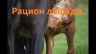как составить рацион для лошади