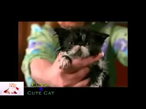 funny cats – Funny animals GIFS with sound)