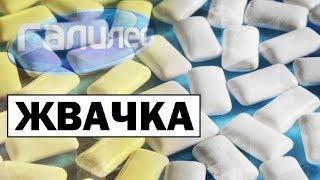 Галилео | Жвачка  [Chewing gum]