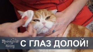 Как чистить глаза кошке?