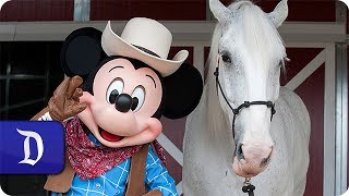 Disneyland Resort Horses at Home in New Circle D Ranch