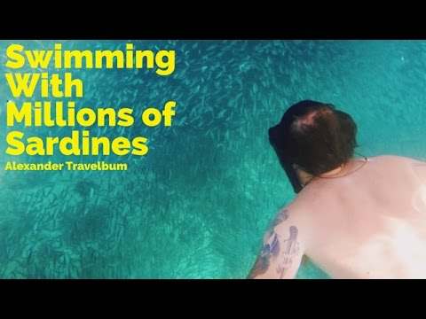Swimming With Millions of Sardines in Moalboal, Philippines