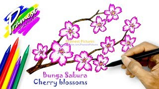 Sakura   Cara Menggambar Dan Mewarnai Gambar Bunga Untuk Anak-anak