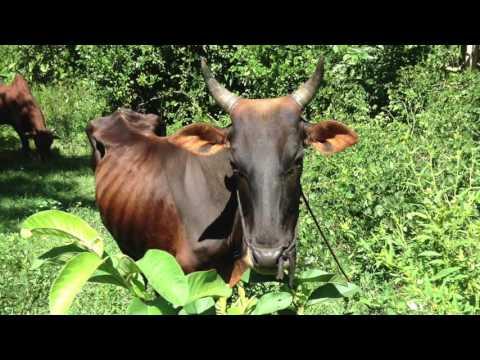 MAVA Cocoa Plantation Tour Sambirano Madagascar