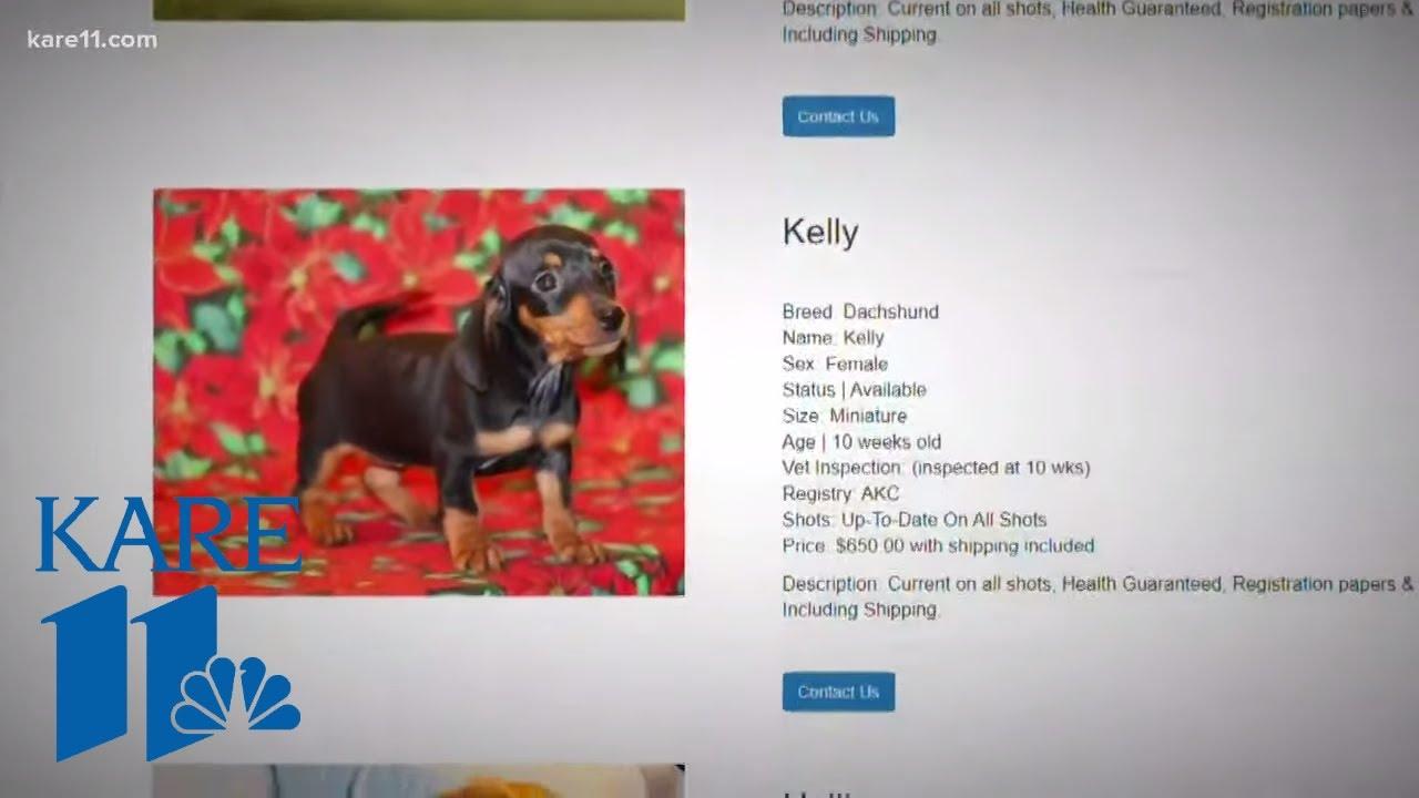 Kare 11 Investigates International Puppy Scam Has Minnesota Cell Youtube