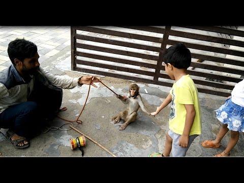 Desi Madaari | Indian Monkey Road Show | Madari and Monkey Show in Delhi