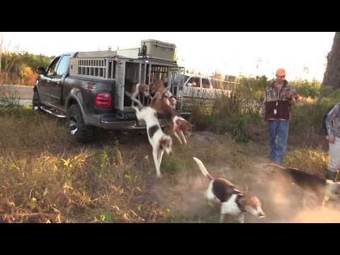Deer Hunting With Hounds Two Does Down!! Kill Shot  2019/2020 Deer Season