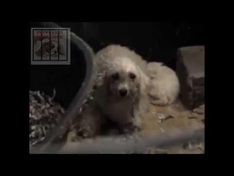 puppy farming UK