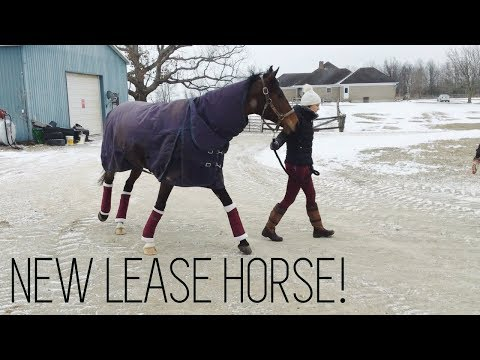 Bringing My Lease Horse Home! | HayItsMaya