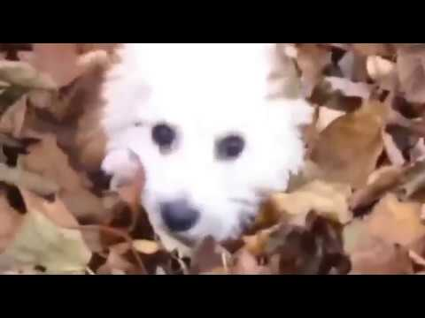 Dogs Make You Laugh Out Loud Episode 2016 Funny Dogs Videos Try Not To Laugh