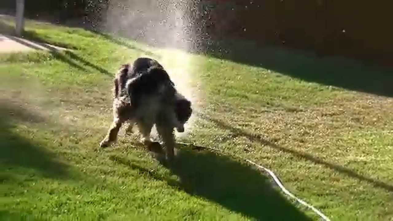 how to stop flies attacking my dog