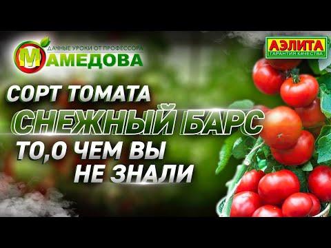 🍅 Сорт Томата Снежный барс - ТО, О ЧЕМ ВЫ НЕ ЗНАЛИ