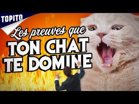 Top 5 Des Preuves Que Tu Vis Chez Ton Chat (et Non L'inverse)