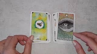 Animal Spirit Oracle Aliexpress
