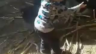 Kavga eden hindileri görünce bakın çocuk ne yapıyor.